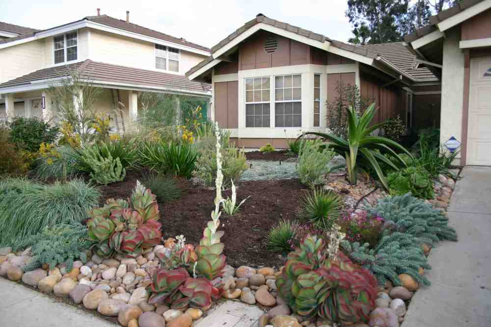 Drought Landscaping front yard